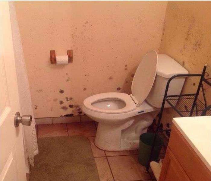 San Antonio Mold Experts